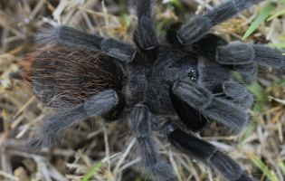 The eyes of the tarantula. APS-C, 90 mm macro, f/13, 1/20s